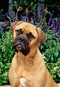 DOG 01 CE0003 01