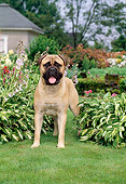 DOG 01 CE0005 01