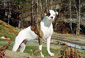 DOG 01 CE0006 01