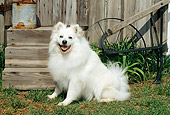 DOG 01 CE0008 01