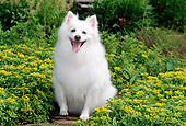 DOG 01 CE0010 01
