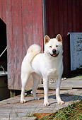 DOG 01 CE0015 01