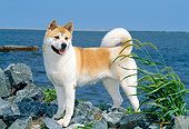 DOG 01 CE0018 01