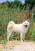 DOG 01 CE0019 01