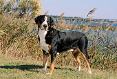 DOG 01 CE0021 01