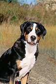 DOG 01 CE0022 01