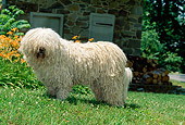 DOG 01 CE0024 01