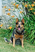 DOG 01 CE0025 01