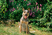 DOG 01 CE0026 01