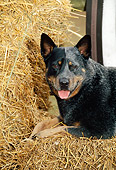 DOG 01 CE0030 01