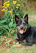 DOG 01 CE0032 01
