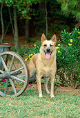 DOG 01 CE0034 01