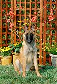 DOG 01 CE0041 01