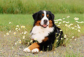 DOG 01 CE0044 01