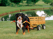 DOG 01 CE0045 01