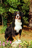 DOG 01 CE0047 01