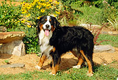 DOG 01 CE0048 01