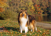 DOG 01 CE0058 01