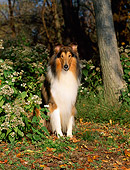 DOG 01 CE0061 01