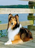 DOG 01 CE0064 01