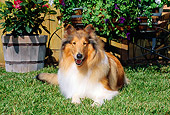 DOG 01 CE0065 01