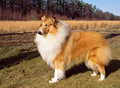 DOG 01 CE0067 01