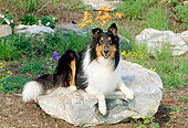 DOG 01 CE0070 01