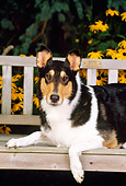 DOG 01 CE0072 01