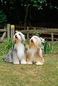 DOG 01 CE0076 01