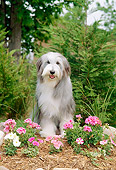 DOG 01 CE0083 01
