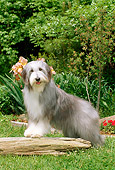DOG 01 CE0084 01