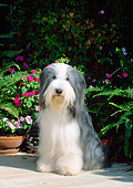 DOG 01 CE0085 01