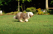 DOG 01 CE0089 01
