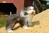 DOG 01 CE0090 01