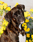 DOG 01 CE0094 01