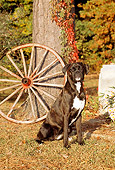 DOG 01 CE0095 01