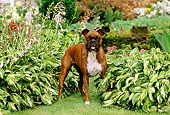 DOG 01 CE0096 01