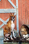 DOG 01 CE0100 01