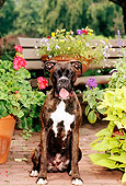 DOG 01 CE0102 01