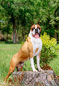 DOG 01 CE0108 01