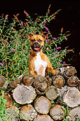 DOG 01 CE0109 01
