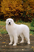 DOG 01 CE0113 01