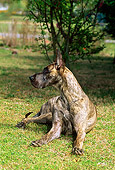 DOG 01 CE0114 01