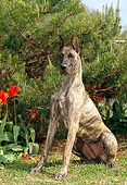 DOG 01 CE0115 01