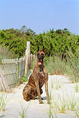 DOG 01 CE0116 01