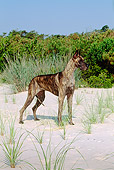 DOG 01 CE0117 01