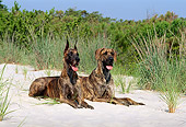 DOG 01 CE0118 01