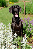 DOG 01 CE0119 01