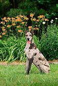 DOG 01 CE0124 01