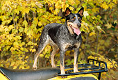 DOG 01 CE0126 01
